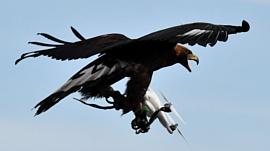 Дроны будут защищать аэропорты от птиц