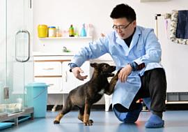 Китайские ученые будут клонировать полицейских собак