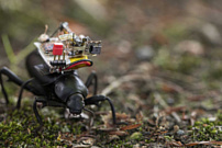 Ученые создали беспроводную камеру, которая помещается на спину жука