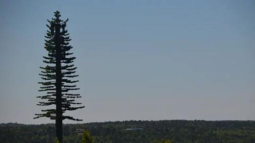 Канадская компания замаскировала вышку сотовой связи под дерево