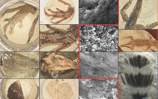 Исследователи научились всего за сутки создавать реалистичные окаменелости