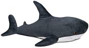 Fancy Акула