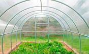 Агросити Плюс 10 м (поликарбонат 4 мм)