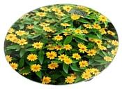 Home Element HE-SC908 Желтые маргаритки