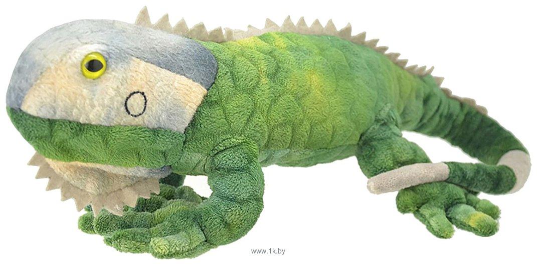 Фотографии All About Nature Игуана Зеленая K8353-PT