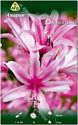 Семена цветов АПД Амарин Белладива / A30924