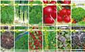 Набор семян АПД Зелень прямо с грядки / A105071