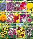 Набор семян цветов АПД Неприхотливые однолетники / A203641