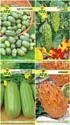 Набор семян АПД Экзотика из семян / A105101