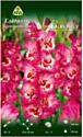 Семена цветов АПД Гладиолус Вандола / A30953