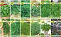 Набор семян АПД Ароматный шашлычок / A105051