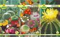 Набор семян цветов АПД Колючий дом / A203671