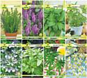 Набор семян АПД Народная медицина / A105061
