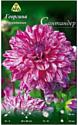 Семена цветов АПД Георгина Сантандер / A30102