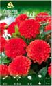 Семена цветов АПД Георгина Валентин / A30064