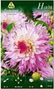 Семена цветов АПД Георгина Надя Рут / A30089