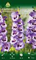 Семена цветов АПД Гладиолус Виста / A31067